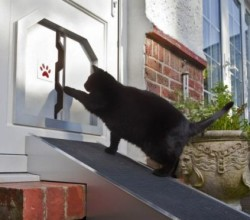 cat flat installation services